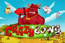 Crazy Cows Slot